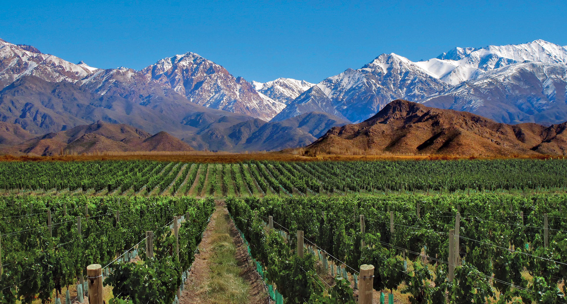 Malbec + vineyards +Argentina